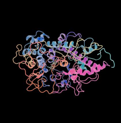 Thyroid Hormones – BioTech